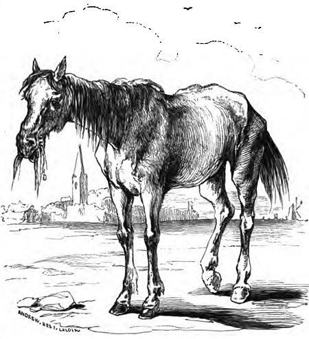 CavalloChishotte 1
